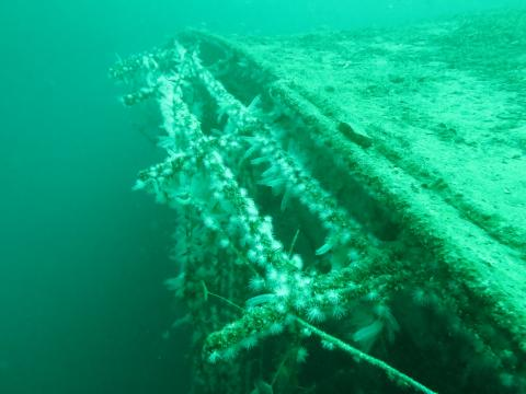 Wreck of the Oldenburg